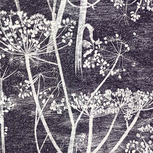 cole and son Cow Parsley black 66/7046