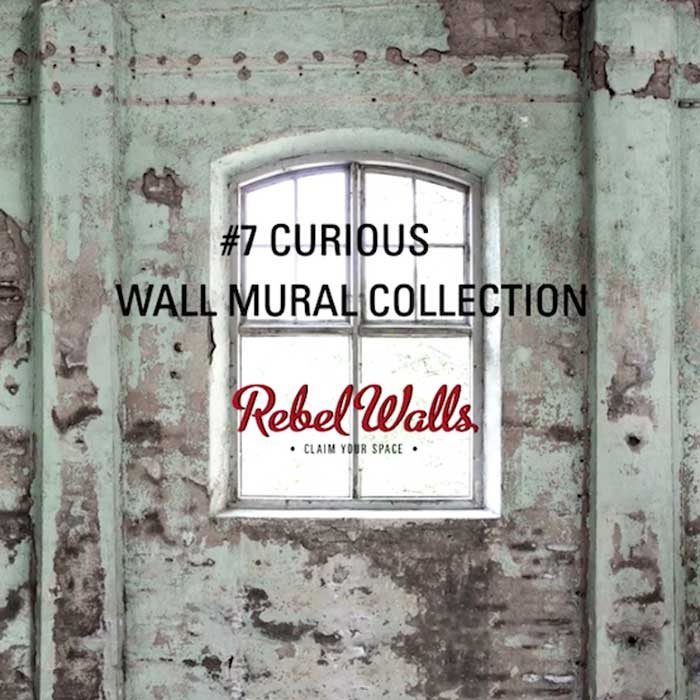 rebel walls N0 7 Curious