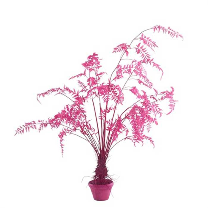 pols potten FERN IN POT
