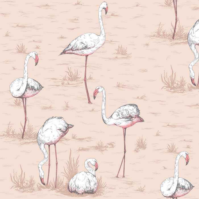 Cole and son flamingos