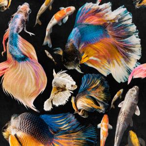 Mind-the-gap-Goldfish-Anthracite-WP20301
