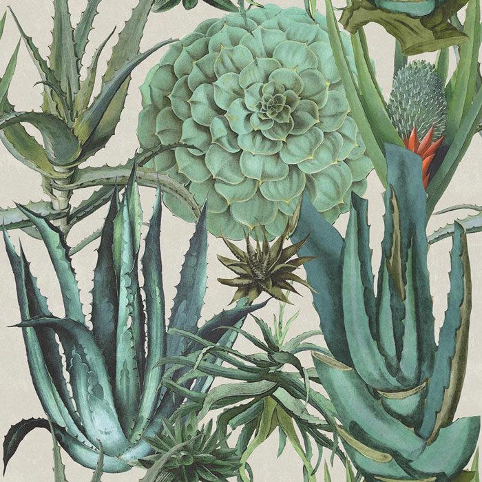 Mind-the-Gap-Succulentus-WP20168