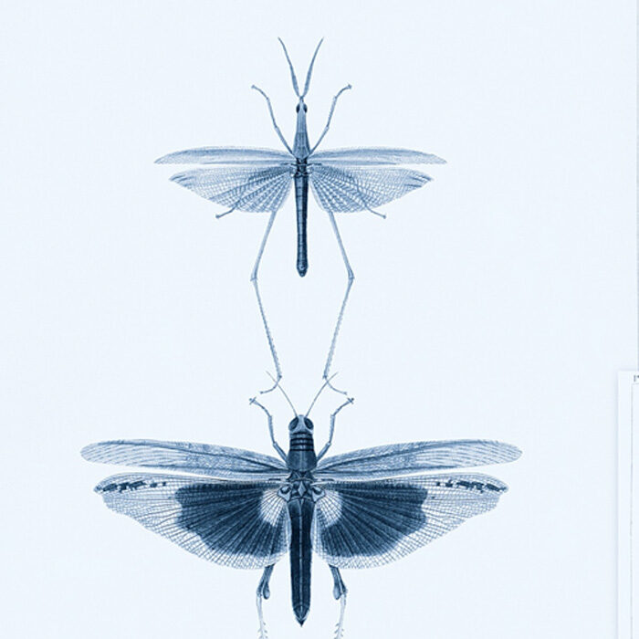 Mind the Gap behang Entomology Blue WP20235